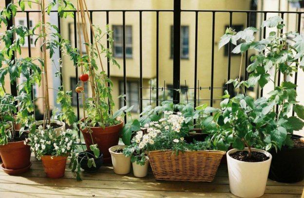 Qué plantar en un huerto urbano sin sol? | Eco Huerto Urbano